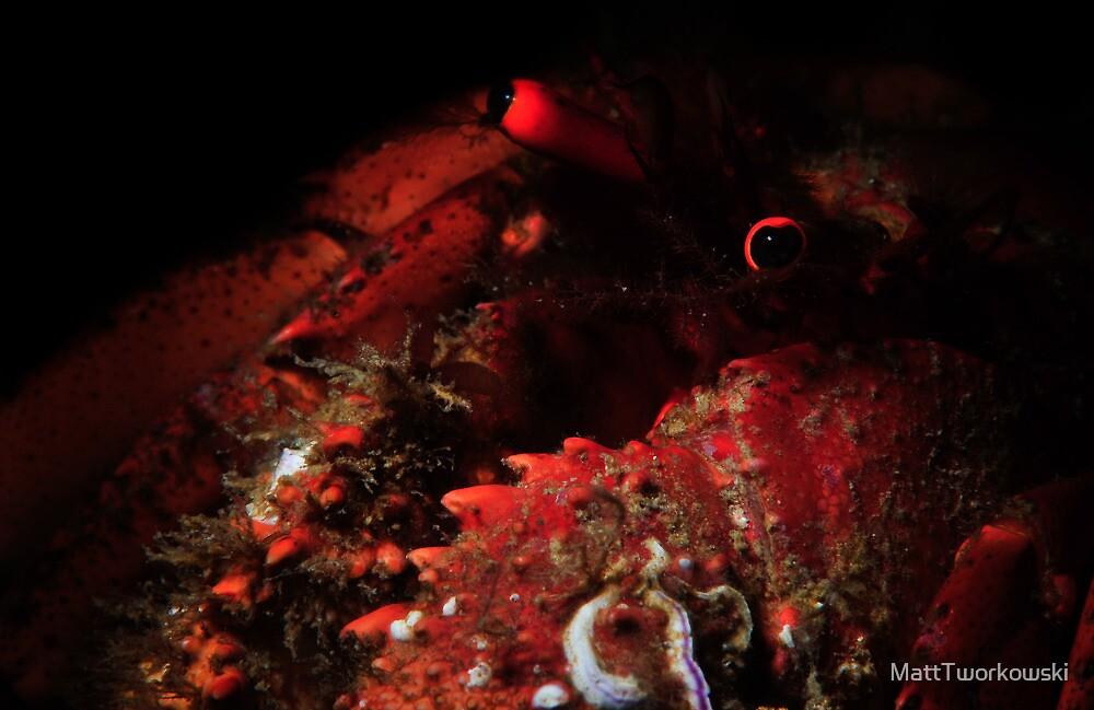 Snooted Hermit Crab by MattTworkowski