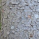 Tree Trunk Nature Pattern by Nadine Staaf