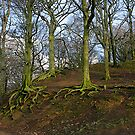 Roots exposed by m4rtys