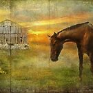 Barn and Horse On Barnboard by jules572