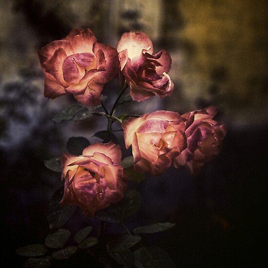 Roses by Silvia Ganora
