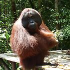 Orangutan by springs