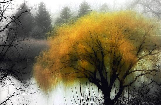 Foggy Morning © by Dawn M. Becker