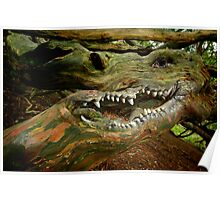 BARK OF THE DRAGON TREE Poster