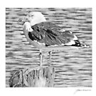Rock Harbor Seagull by J.D. Bowman