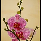 Orchidea. by richi90
