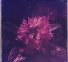 starburst by Jill Auville