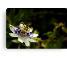 Passion Flower Canvas Print