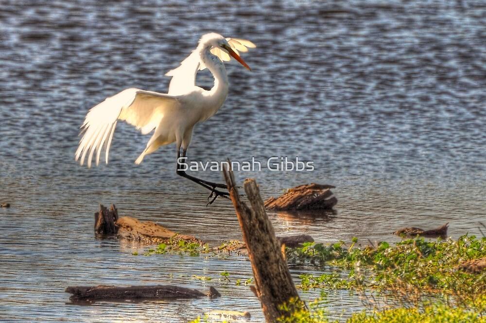 Great Egret by Savannah Gibbs