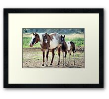 Paint Mare and Foal Framed Print