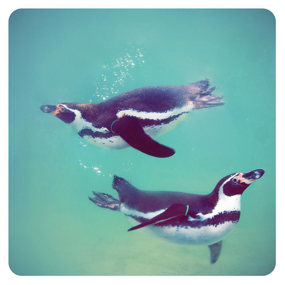 Penguins by photografever