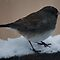 Bird in Snow by Barry Doherty