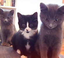 Three Little Kittens by Tibby Steedly