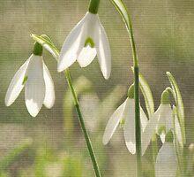 Dreamy White by Patsy Smiles