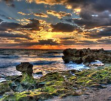Coral Cove Shoreline by Michael Damanski