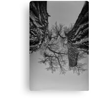 Dueling Brothers Fighting Trees Canvas Print