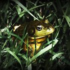 Lake Frog by Alice Schuerman