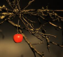 Eden by Nigel Bangert