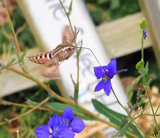 Tasty Nectar  by Brenda Dahl