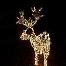 Winter Deer by Douglas E.  Welch