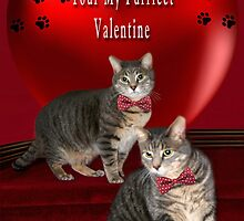 ❁ ♥¸.•*AM I YOUR PURRFECT VALENTINE?❁ ♥¸.•* by ✿✿ Bonita ✿✿ ђєℓℓσ