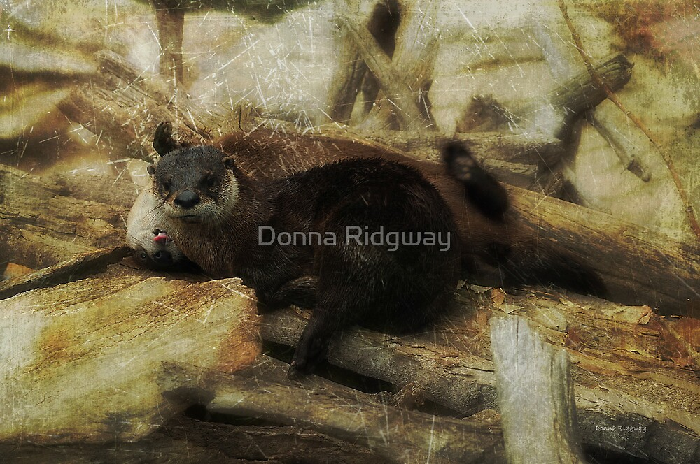 She's Crazy About Me! River Otters playing by Donna Ridgway