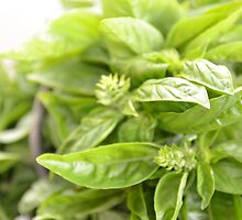 Fresh Sweet Basil by SwapShuffle