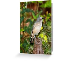 Rufous Whistler - Female Greeting Card