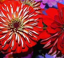 Red zinnias by ♥⊱ B. Randi Bailey