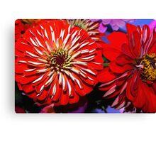 Red zinnias Canvas Print