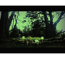 Live in the forest Photographic Print