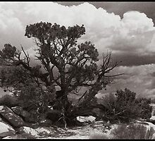 Wild Desert Tree by Steven Lungley
