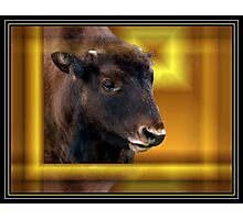 Baby Buffalo Abstract Photographic Print