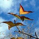 Butterflies? by Elizabeth McPhee