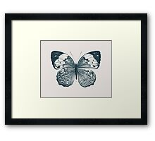 Butterfly - 2 Framed Print