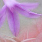 Lilac Rose by Emma  Wertheim