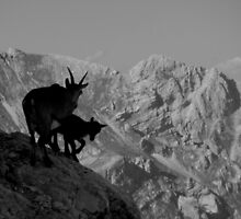chamois in Alps by DeKaArt
