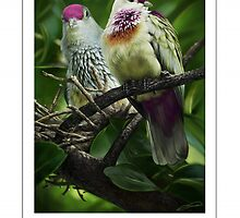 MANY-COLORED FRUIT DOVE (not a photograph or photo manip) by DilettantO