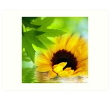 A Sunflower in Shade Art Print