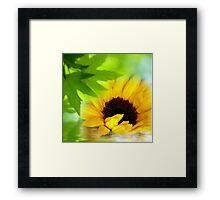 A Sunflower in Shade Framed Print
