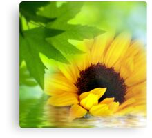 A Sunflower in Shade Metal Print