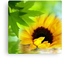 A Sunflower in Shade Canvas Print
