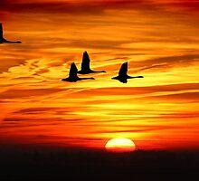 Morning flight by jonlenton