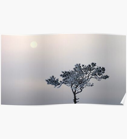 31.1.2012: Pine Tree and Winter Sun Poster