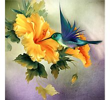 Little Humming Bird Photographic Print