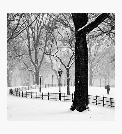 Central Park Walker Photographic Print