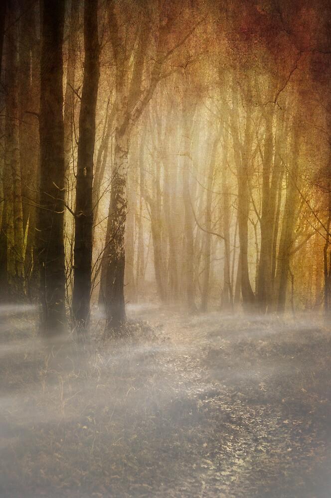 misty woodland path by meirionmatthias
