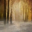 misty woodland path by meirionmatthias