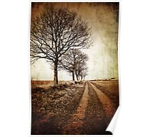 tree lined winter track Poster