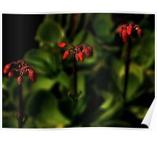 Succulent Red Flowers Poster